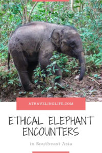 If you're looking for the best places to see elephants in Southeast Asia, then check out these recommendations from travel bloggers on where you can have an ethical elephant experience, such as the Elephant Nature Park in Thailand. | elephant sanctuary Thailand | elephant rescue Thailand | wildlife travel destinations | #Thailand #Malaysia #Laos #adventuretravel #ecotourism #wildlifetravel