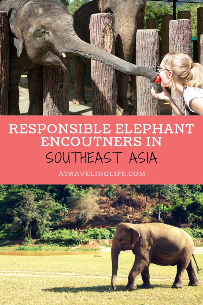Where are the best places to see elephants in Southeast Asia? Check out these recommendations from travel bloggers on where you can see wild elephants responsibly, such as the Kuala Gandah Elephant Sanctuary in Malaysia. | wildlife travel destinations | elephant sanctuary Malaysia | elephant rescue Malaysia | ethical elephant experience | #adventuretravel #ecotourism #wildlifetravel #Malaysia #Thailand #Laos
