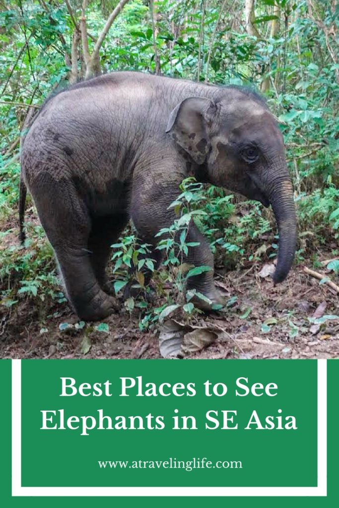 The best places to see elephants in Southeast Asia are those that focus on conservation, education, and proper treatment of the animals. If you want an ethical elephant encounter, then check out these recommendations from travel bloggers on the best places to see elephants in Southeast Asia, including MandaLao in Laos. | elephant sanctuary Laos | elephant rescue Laos | responsible elephant experience | wildlife travel destinations | #Laos #Malaysia #Thailand #adventuretravel #ecotourism #wildlifetravel