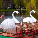 swan boats in the Public Garden in Boston
