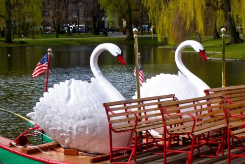 swan boats in the Public Garden in Boston